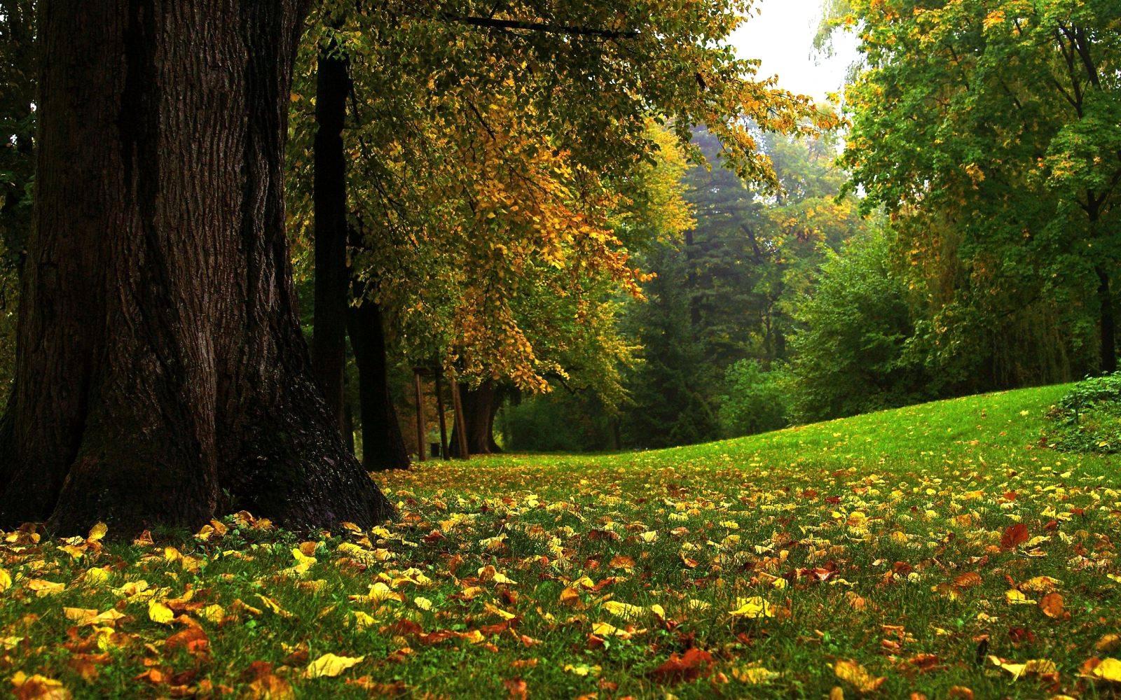 A Importância das Florestas para a Vida