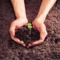Técnicas para melhorar a qualidade do solo