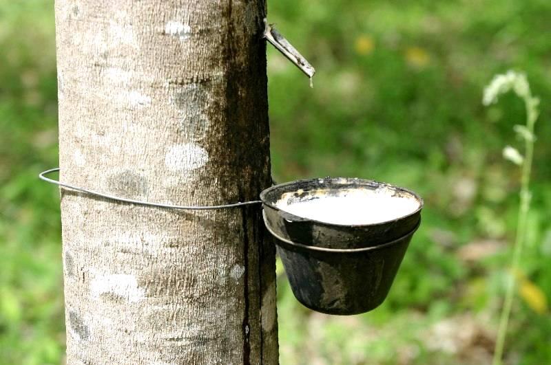 A Produção da Borracha na Amazônia
