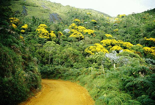 Floresta nativa é o caminho para atrair investidores