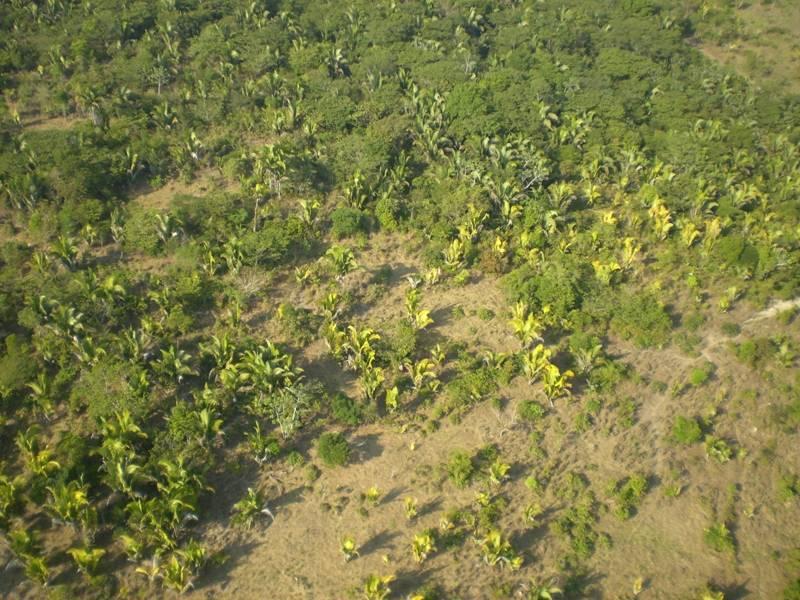 Florestas Tropicais Secundárias