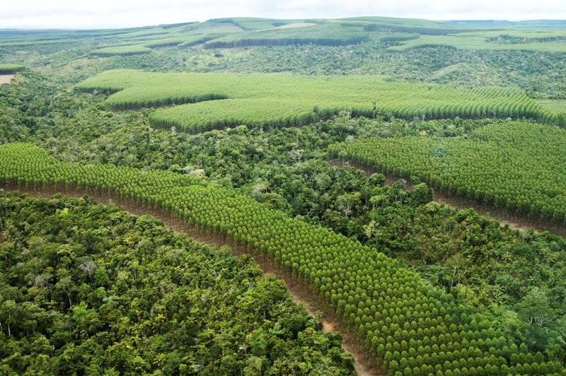 Mato Grosso pretende aumentar áreas de manejo florestal de maneira sustentável