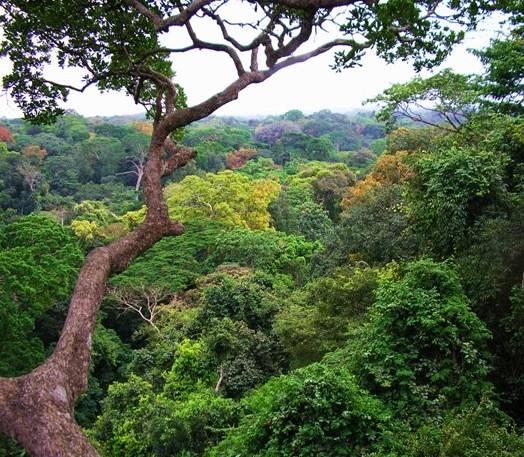 A importância das florestas para os seres vivos