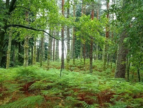Investimento em pesquisa ajuda a promover usos alternativos dos produtos florestais