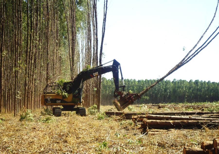 A importância do planejamento da colheita da madeira