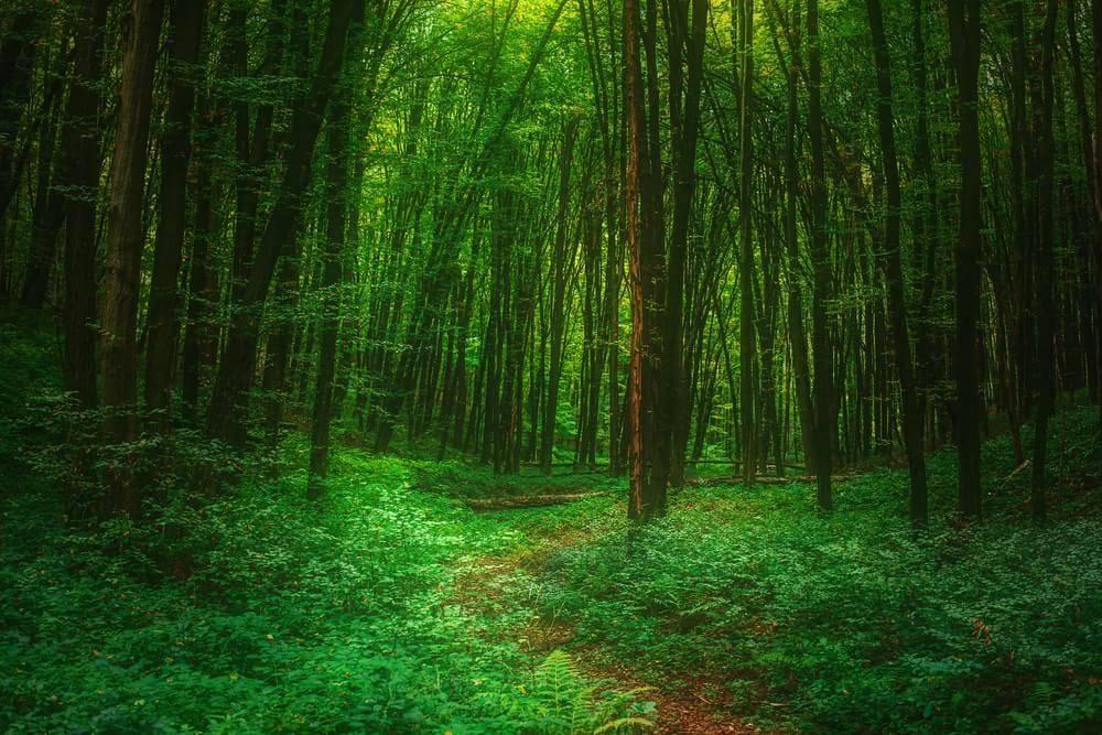 Florestas da Índia valem mais do que US$ 1,7 trilhões, segundo instituto de pesquisa