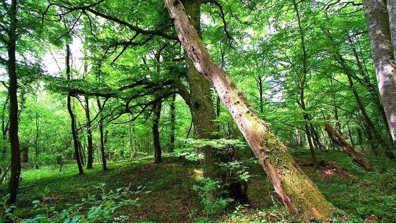 CNI Sustentabilidade debate sobre o potencial da biodiversidade e florestas