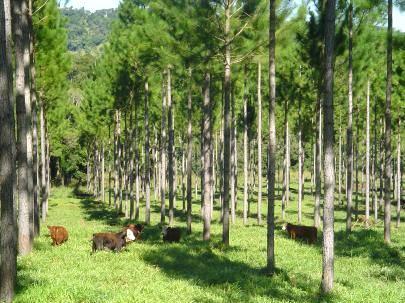 Plantar árvores é alternativa para aumentar renda do produtor rural