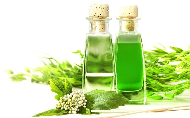 As utilidades do óleo do eucalipto