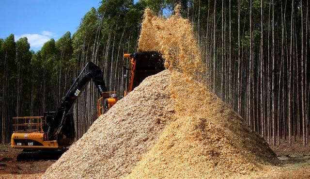 Uso da biomassa florestal via cavaco cresce no país