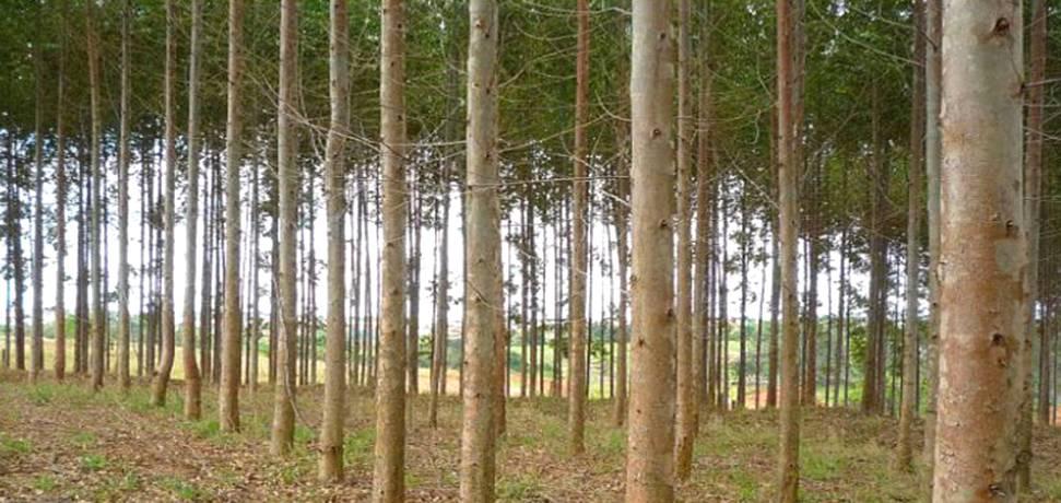 Evento sobre Sanidade Florestal será realizado na capital mineira