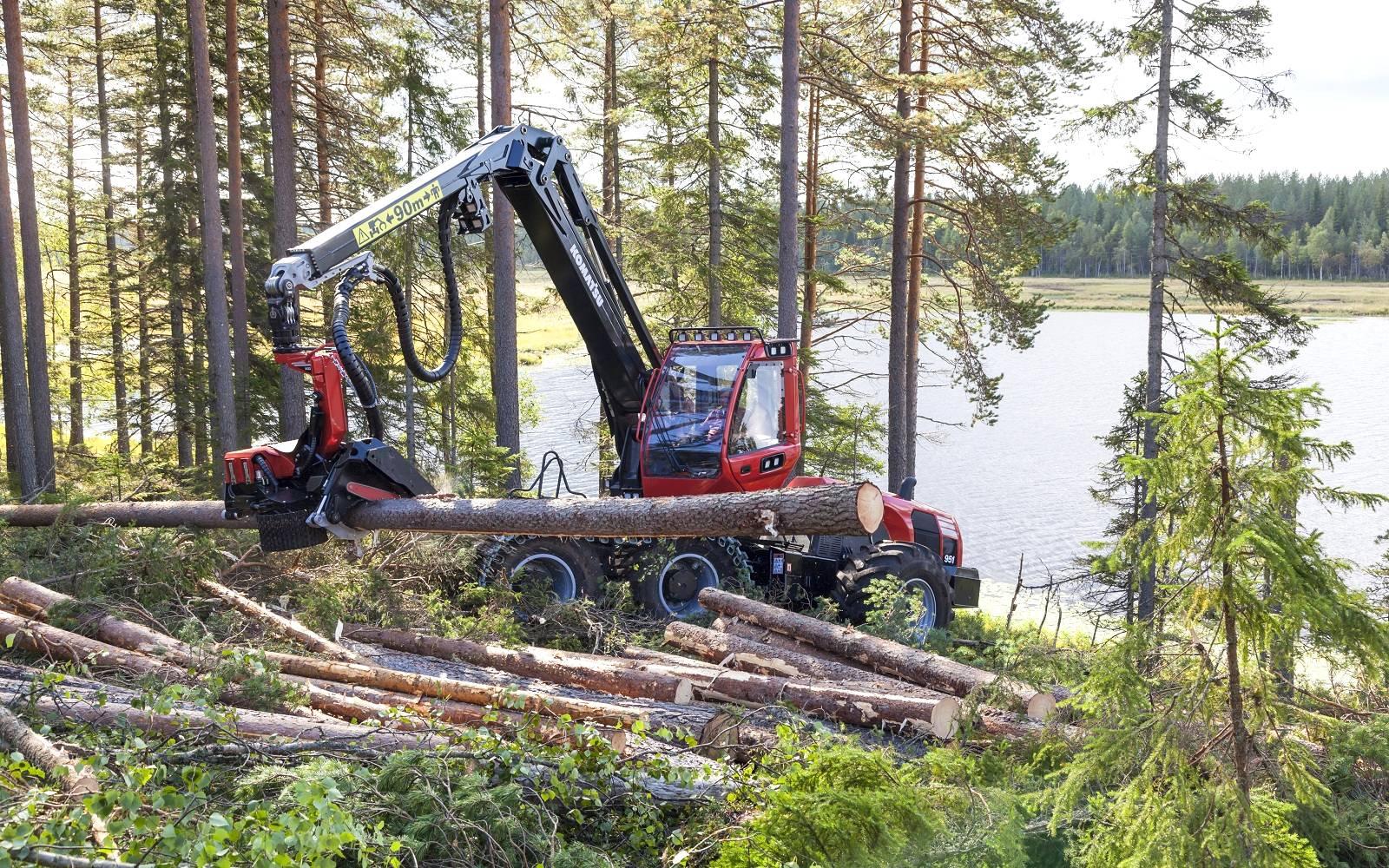 Setor florestal registra crescimento de exportações de madeira