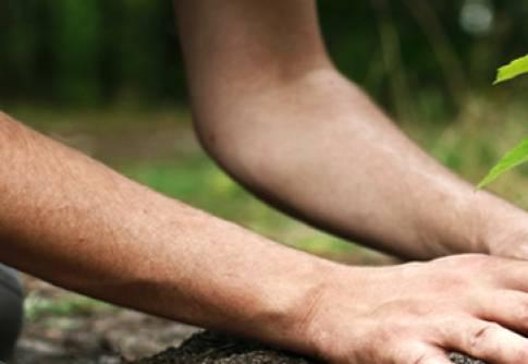 A grande importância do reflorestamento