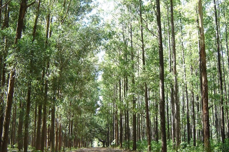 Cidade mineira sedia evento sobre inventário e mensuração florestal