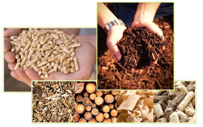 Tipos de biomassa que são utilizados como fonte energética