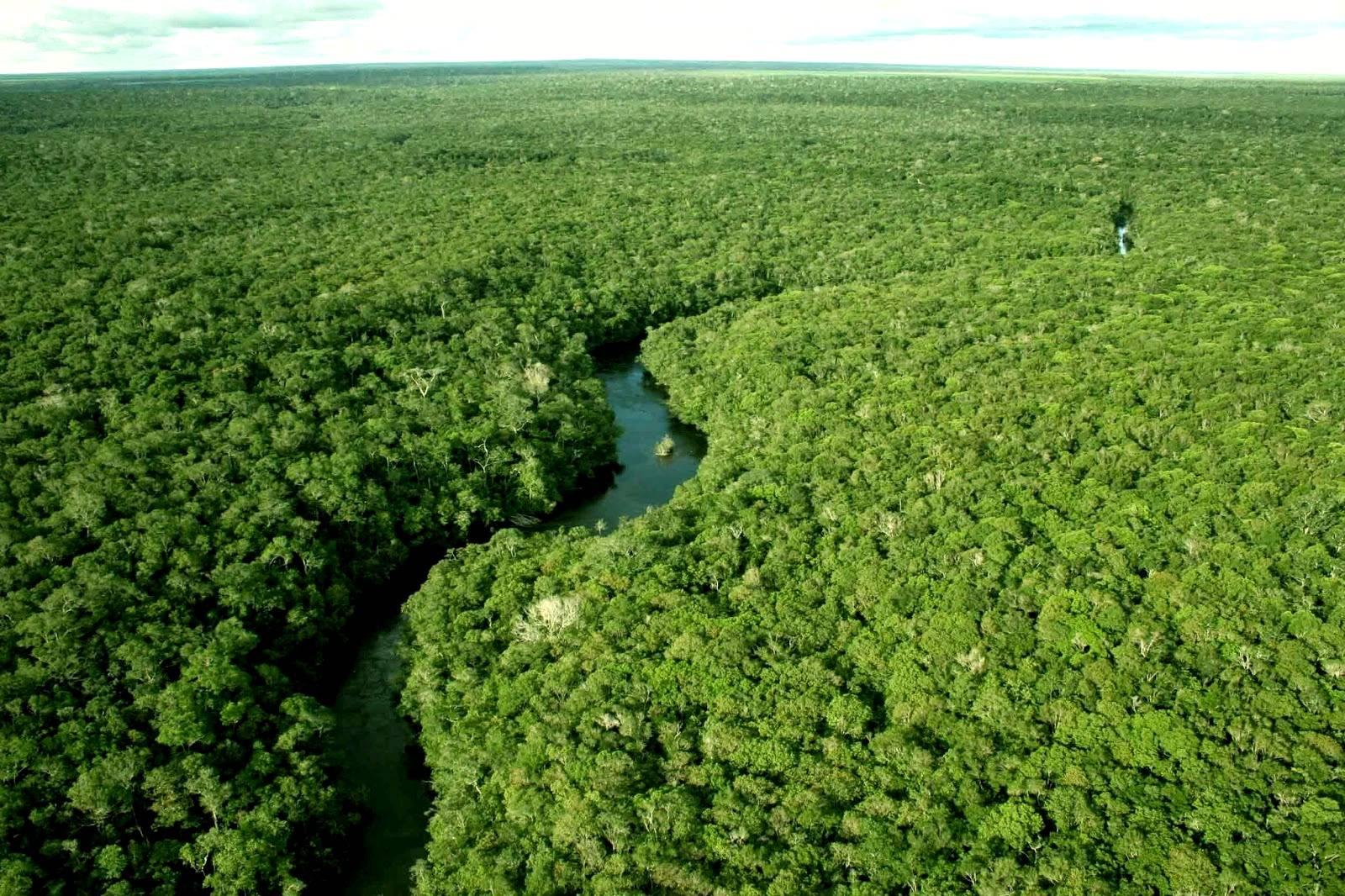 A sustentabilidade de águas e florestas