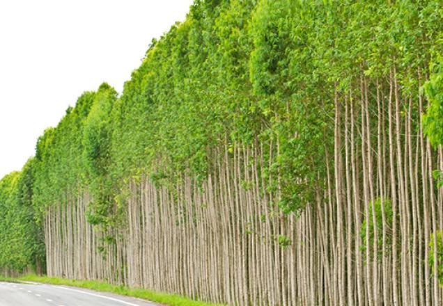 Aumento na produção de produtos florestais impulsiona crescimento do Brasil no setor