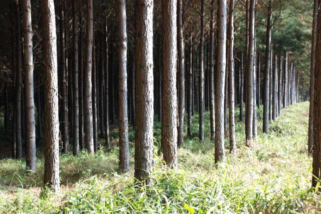 Incentivo a proprietário rural por ações em prol do meio ambiente é aprovado