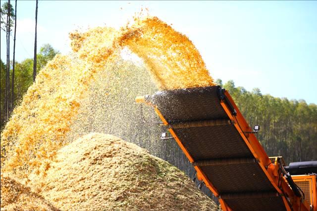 A biomassa no cenário mundial