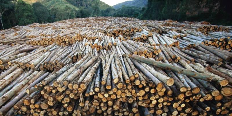 Celulose é um dos produtos brasileiros mais exportados