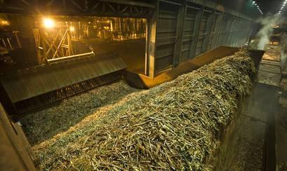 Brasil é destaque na produção de Biomassa