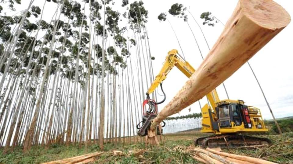 Encontro de executivos florestais promete trazer soluções para o setor