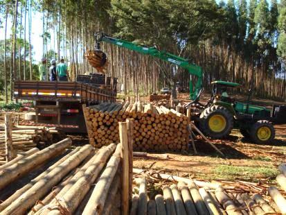 O mercado de eucalipto e pinus no Brasil