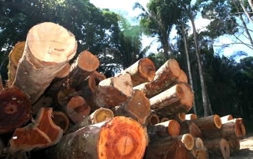 Setembro terá dos importantes eventos voltados para o setor de florestas