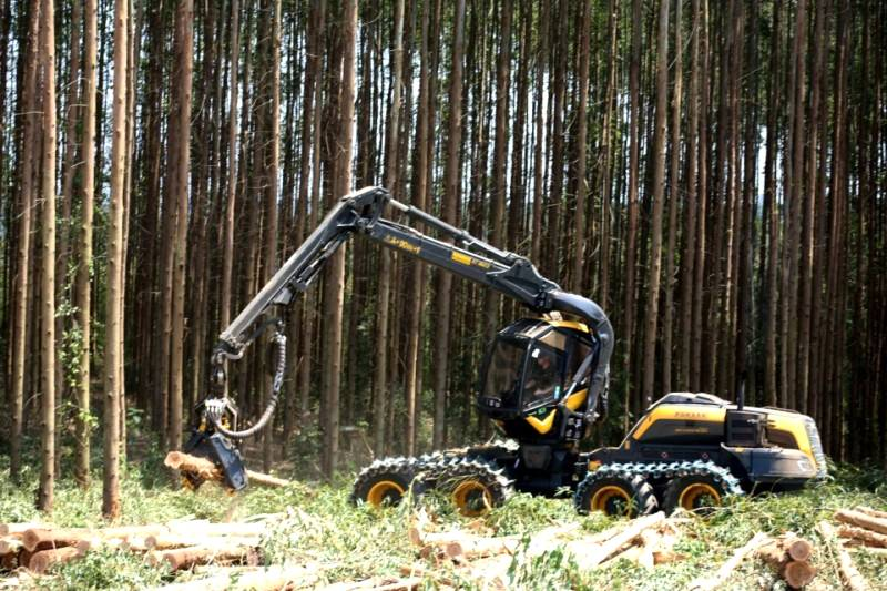 Emissora publica mito sobre o pinus e o eucalipto