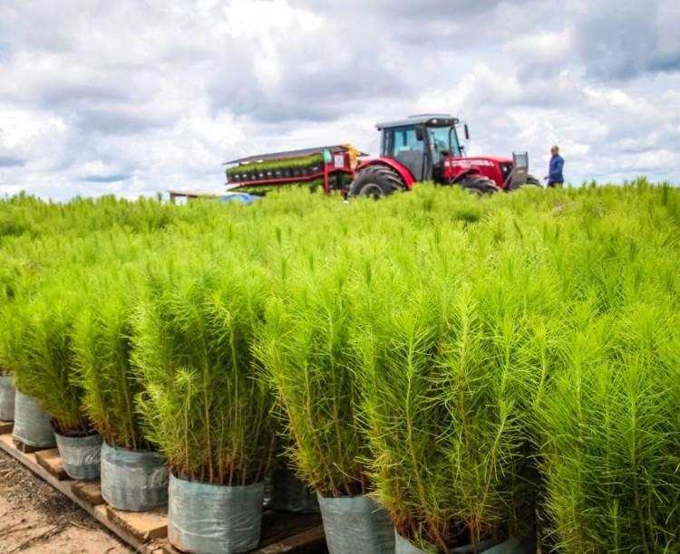 Relatório sobre a indústria brasileira de árvores plantadas confirma posição de destaque