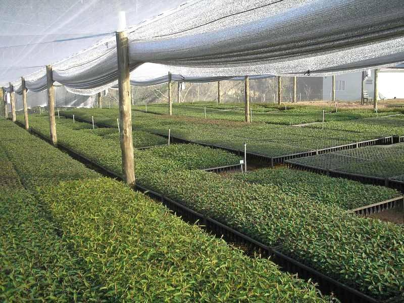 Empresa do setor florestal economiza água e ainda aumenta a produção