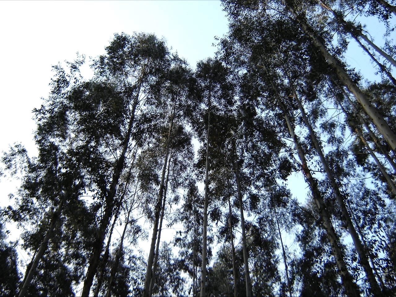 Florestal Tech acontece no Mato Grosso com ênfase em sustentabilidade