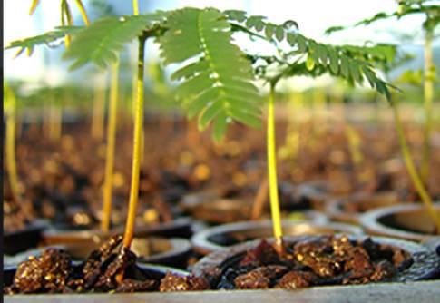 A importância do reflorestamento para o meio ambiente